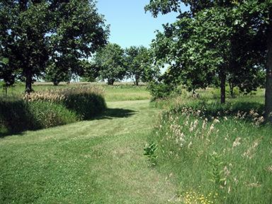 Siemsen Meadows