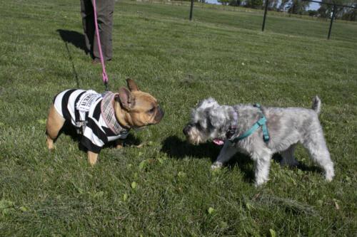 2020 Doggie Pup-kin Fest